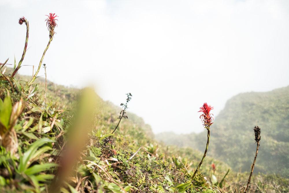 Guadeloupe_2017-82.jpg