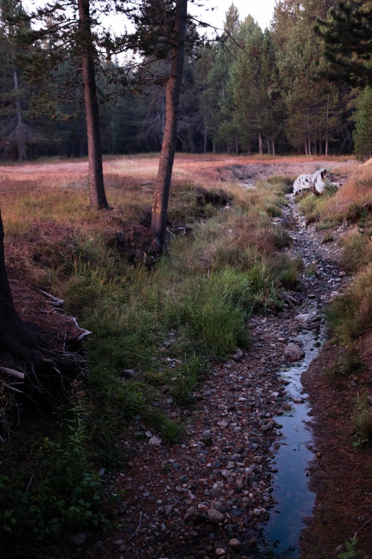 Amelia_Max_Yosemite_Elopement-67.jpg