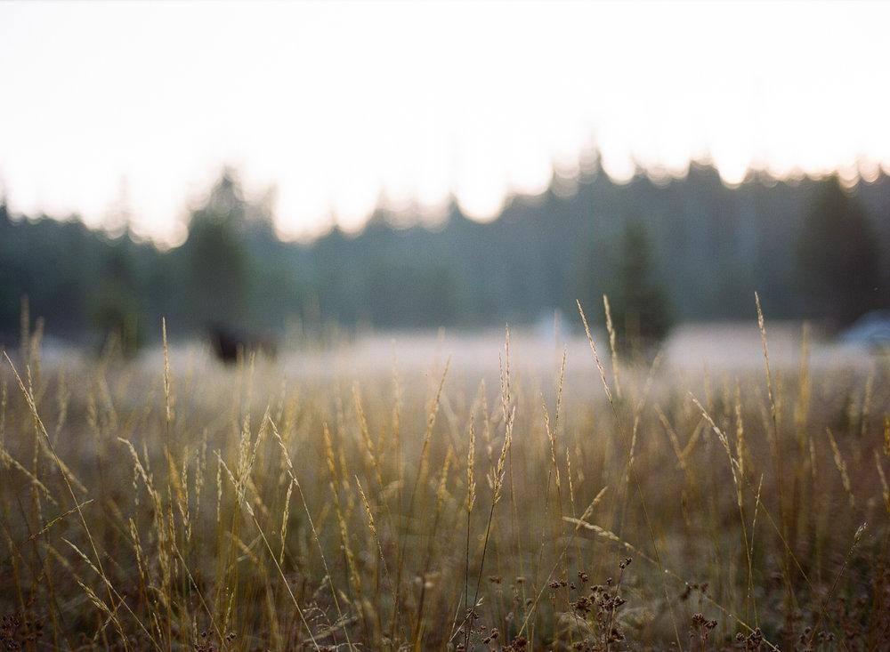 Amelia_Max_Yosemite_Elopement-68.jpg