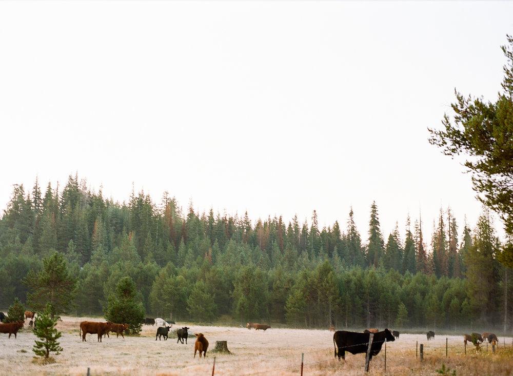 Amelia_Max_Yosemite_Elopement-69.jpg