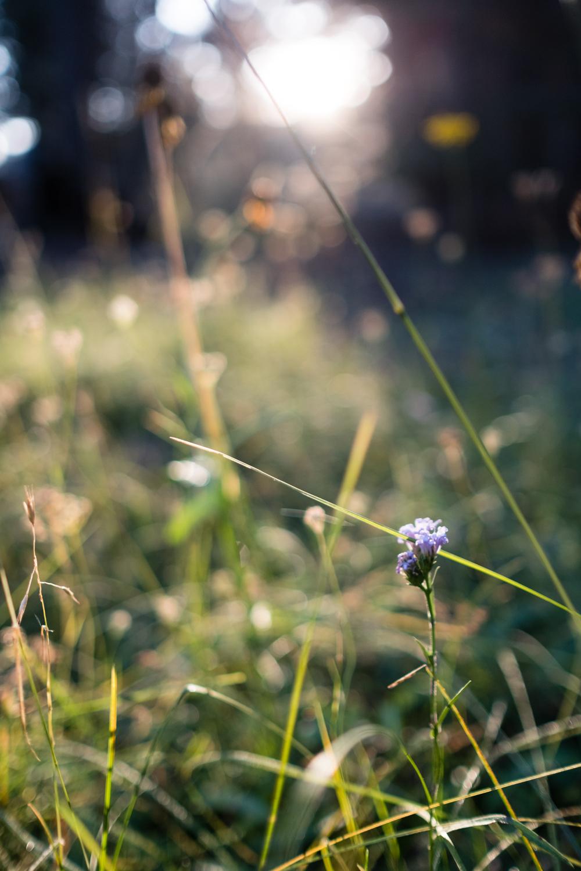 Amelia_Max_Yosemite_Elopement-70.jpg