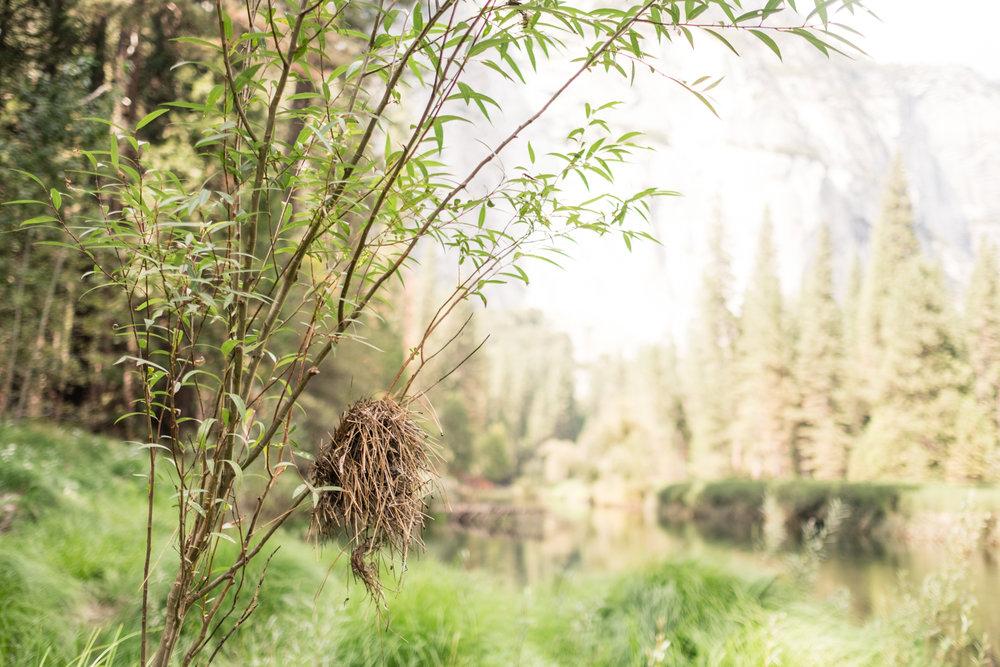 Amelia_Max_Yosemite_Elopement-97.jpg