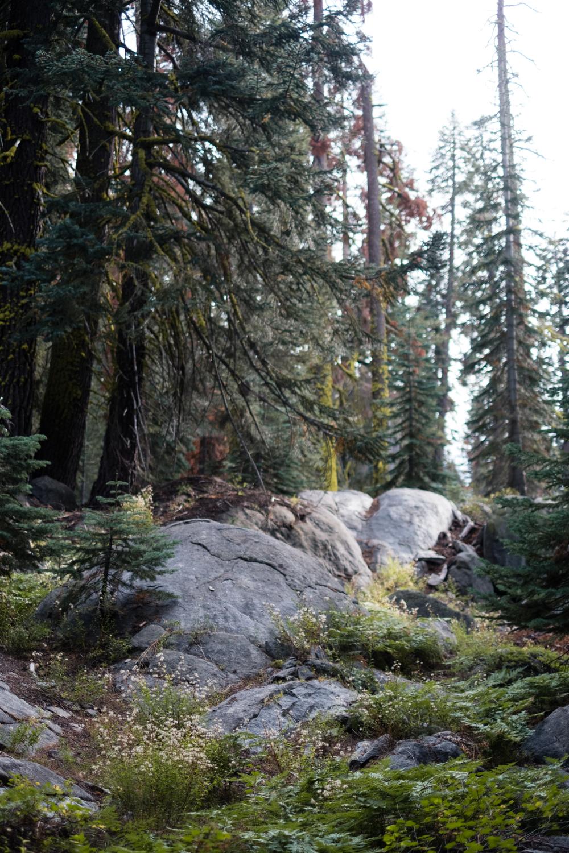 Amelia_Max_Yosemite_Elopement-110.jpg