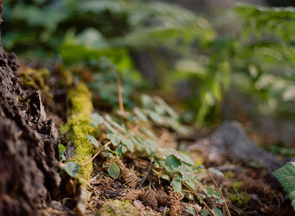 Amelia_Max_Yosemite_Elopement-130.jpg