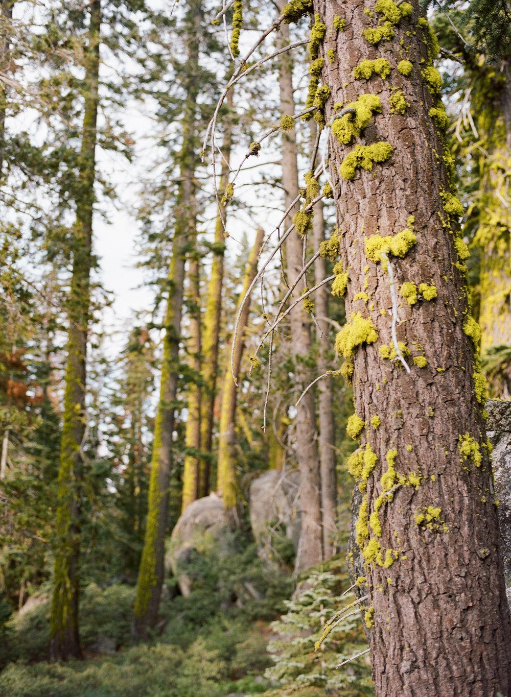 Amelia_Max_Yosemite_Elopement-132.jpg