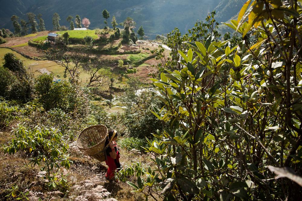 Nepal-JR-009.jpg