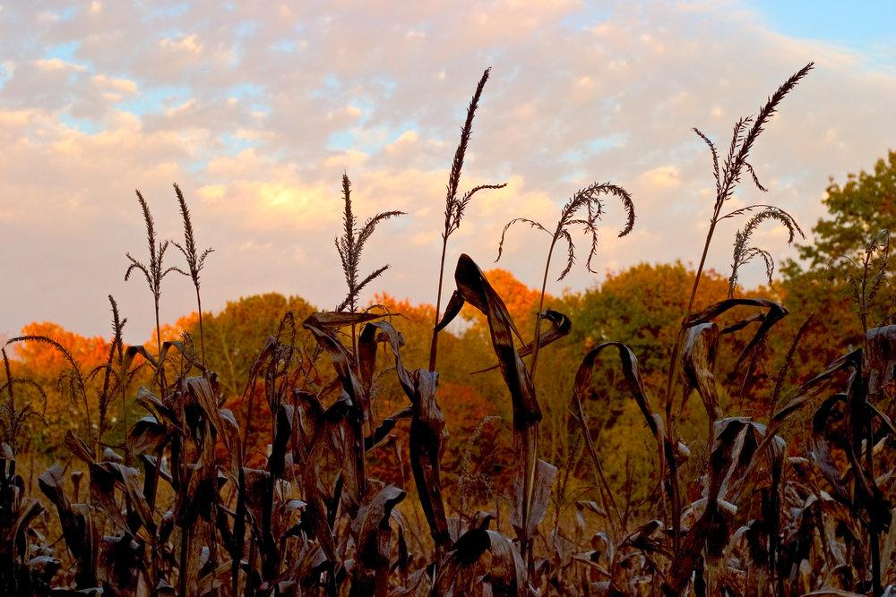 Landscape-JR-009.jpg