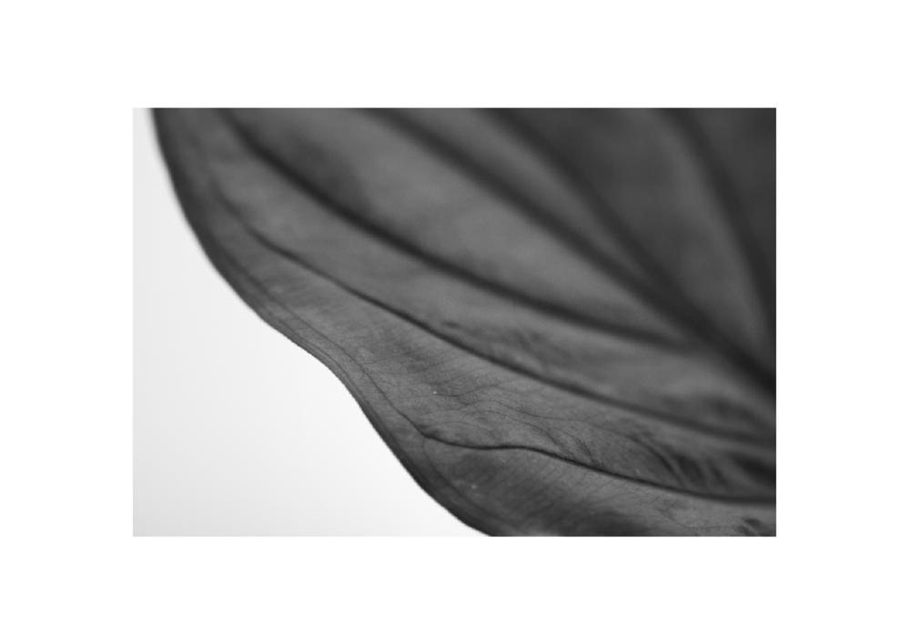 Leaf close-up JULY®