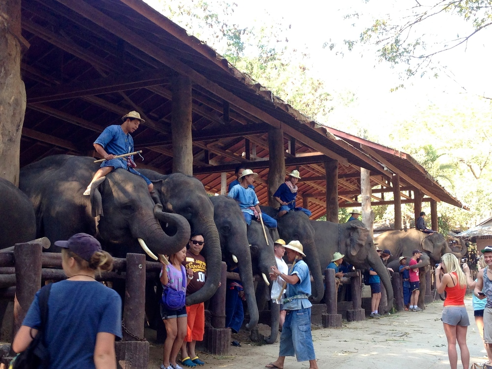 Elephants and their mahuts, at the privately owned Maesa Elephant Camp outside town