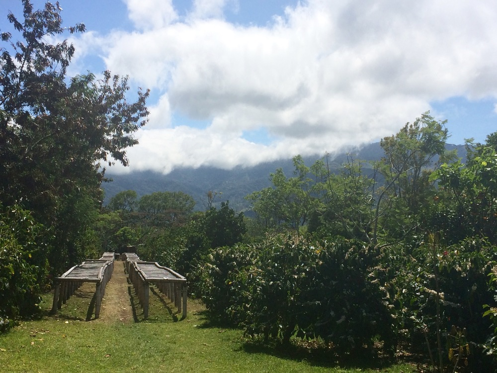 The fertile volcanicsoil and fresh climate makeBoquete an ideal spot to grow coffee.