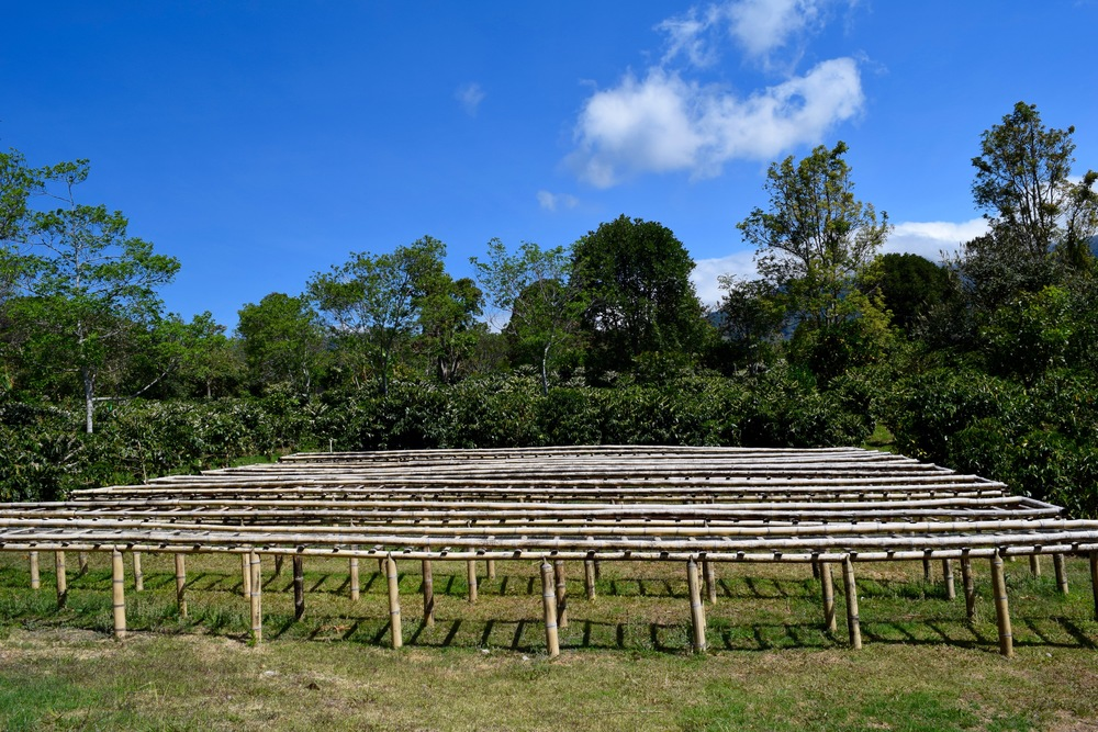 The drying racks, where the 'cherries' are laid out to get some sunshine.