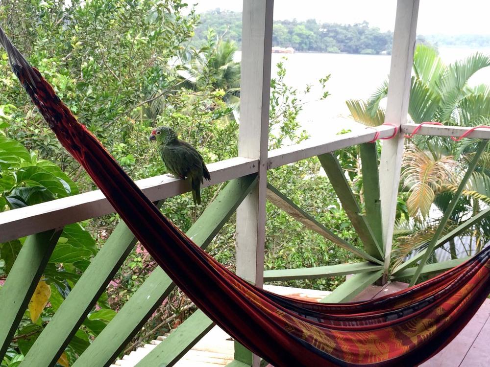 The parrot alarm