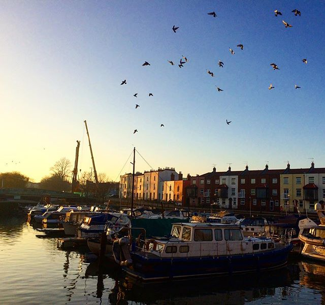 Birds and boats - a skyline you can't get tired of! #harbourside #skyline #winter
