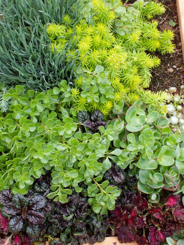GardenClubBox-3.jpg