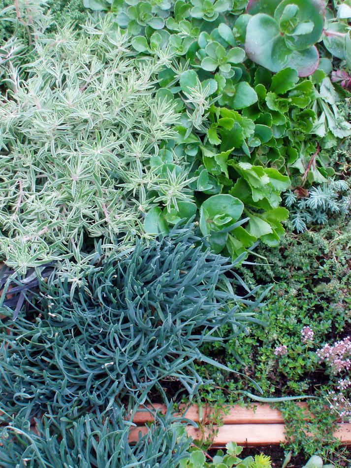 GardenClubBox-4.jpg