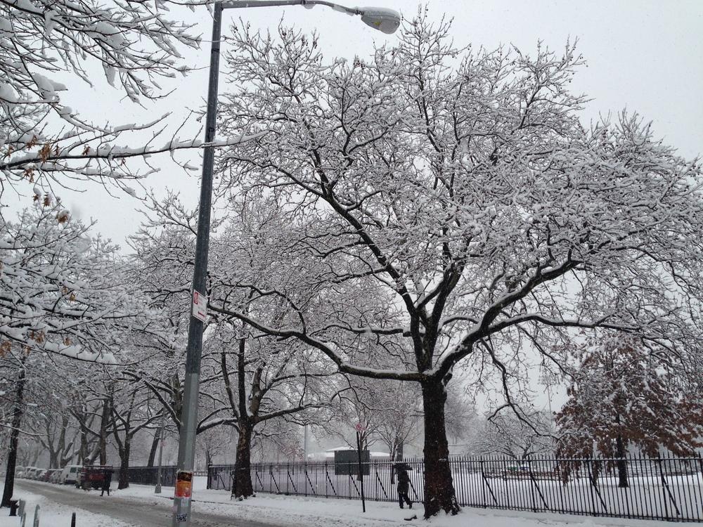 winterparkland