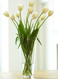 Tulips -French     Colors:  White, peach, yellow   Care:   Cut, keep wrapped to avoid bending, grow 2 inches per day
