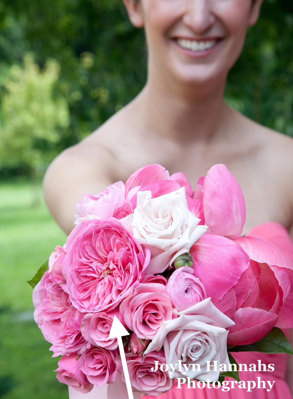 Maria Teresa Garden Rose