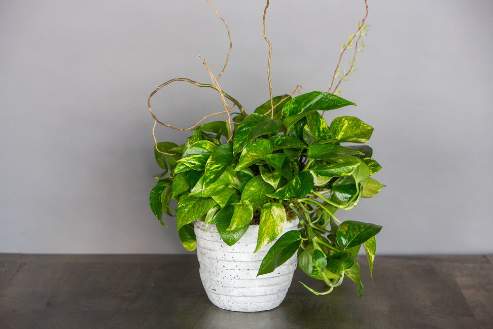 Potted Plant $65
