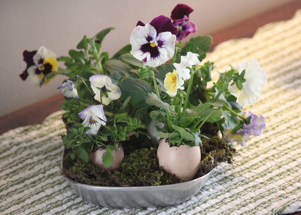 Easter-pansy-eggs.jpg