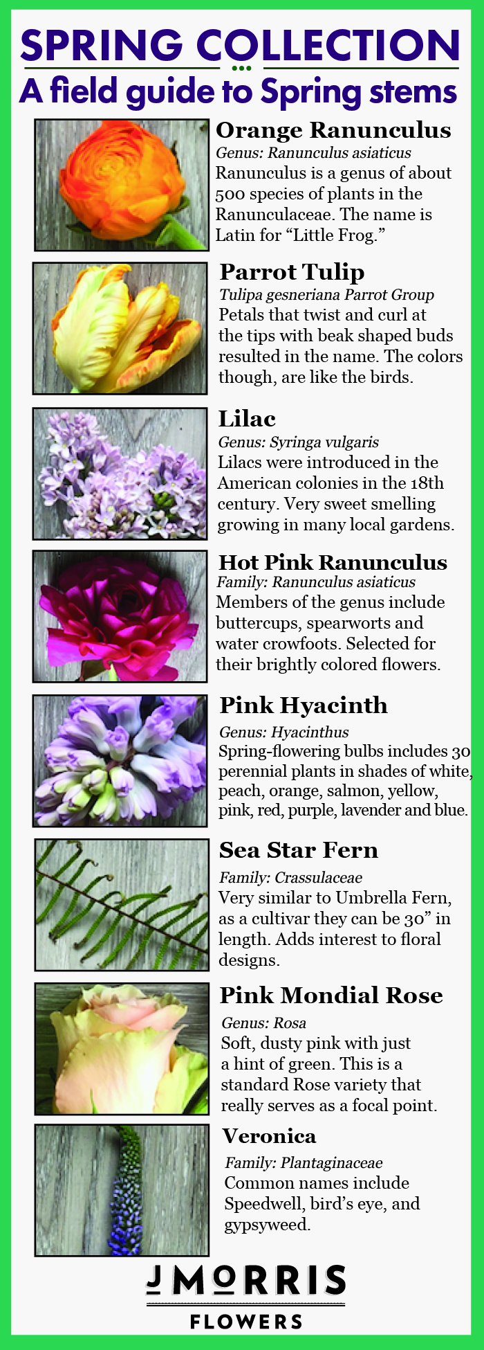 Spring Collection 18 Flower Guide J Morris Flowers
