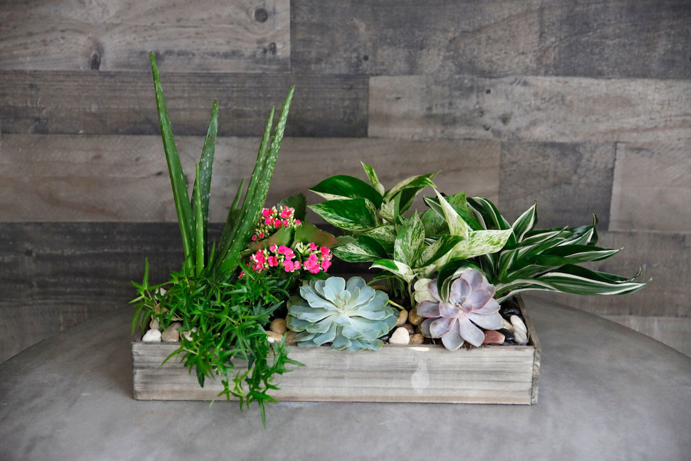 V-day-10-Plant-Succulent-wood-box-pic-2.jpg
