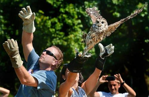 Owl release.jpg