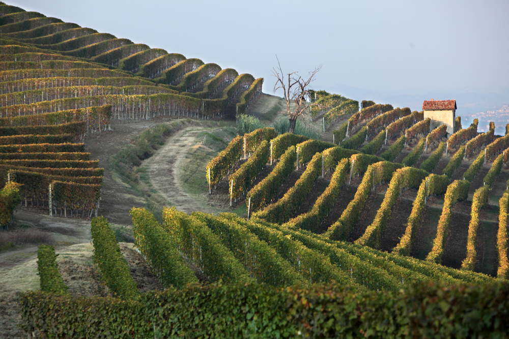 s27_Oct2011_BAROLO_0330.jpg