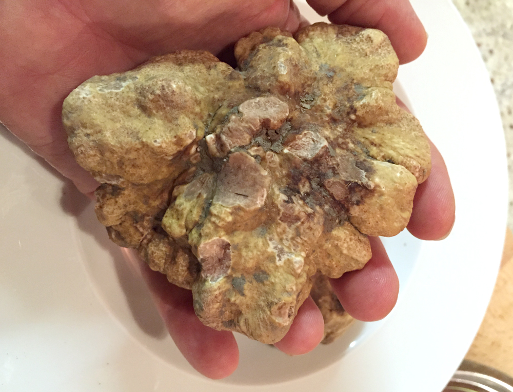 large white truffle