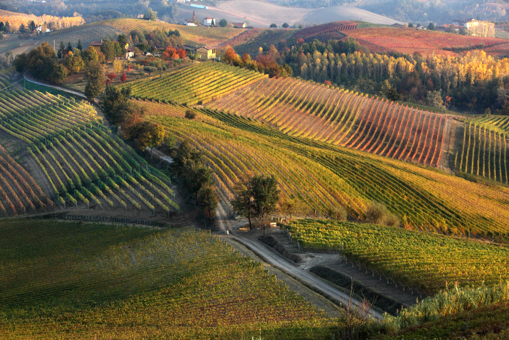 s27_Oct2011_BAROLO_0366.jpg