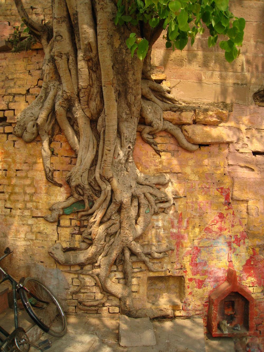 04 wall tree.jpg