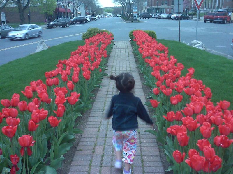 Zuzu & Tulips