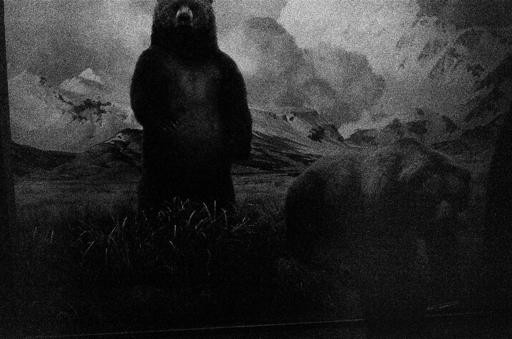 NY15_bear.jpg