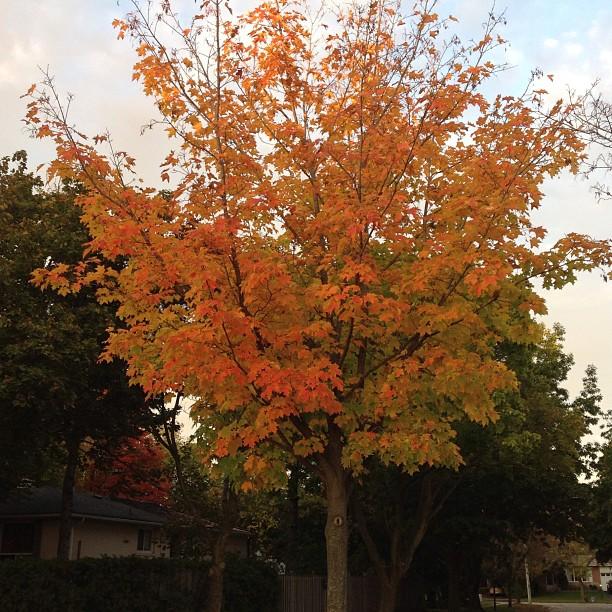 Oh autumn (@4utumncooper), you saucy minx