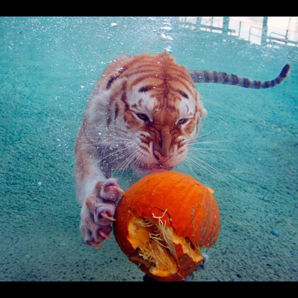 This playful guy makes my pumpkin loving day!