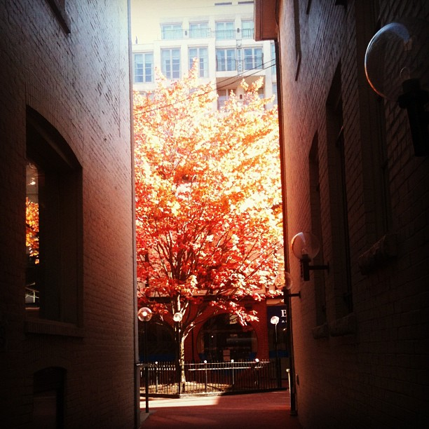 Walking into work and I came upon this tree that I pass everyday. But today it's on fire! #hot #tree #inthecity