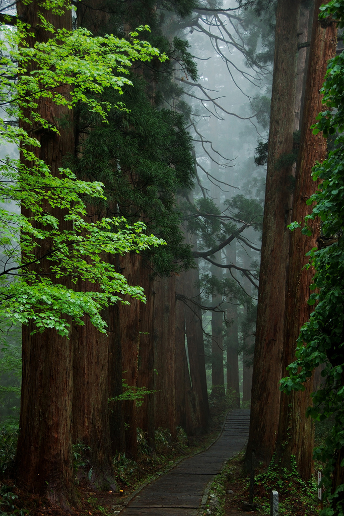 woodendreams: (by Ah Bee Panda) The path