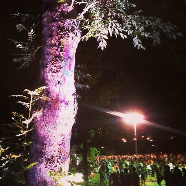 I looked at this tree and saw magic ;) after the #benhoward concert at #echobeach in #toronto