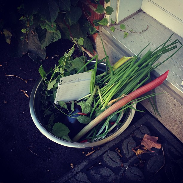 Gift of the day: left my neighbours a bowl of freshly harvested garden veggies - green onions, lemon balm, red hot chili peppers, egg plant and a stalk of rhubarb (with an invite to come get more when it's sweeter for pie)! I feel amazing giving like this, from the land and hearth :)