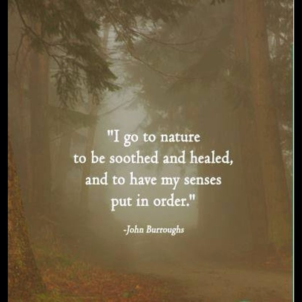 """I go to nature to be soothed and healed, and to have my senses put in order."" -John Burroughs"