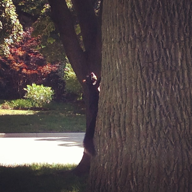 Signs of fall: a squirrel with a nut!