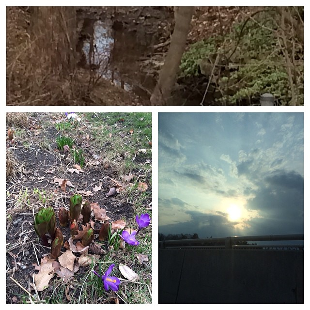 Top: a stream in clarkson which runs underground into our local water table. Left; crocuses (!) and what look to me like artichokes lol. Right: sunset ☺️☀️#naturaldelights #sunsets #springflowers #spring #stream #brook? #urbanminerals
