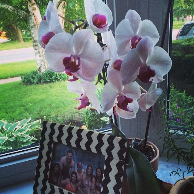 My orchid, which lay dormant through the winter, just finished blooming fully, just in time for Urban Minerals 1st birthday on June 21st, the summer solstice! I can't believe I'm living one year in the future! Woooo! #summersalmosthere #summersolstice #flowers #orchid #surroundedbybeautyandfamily