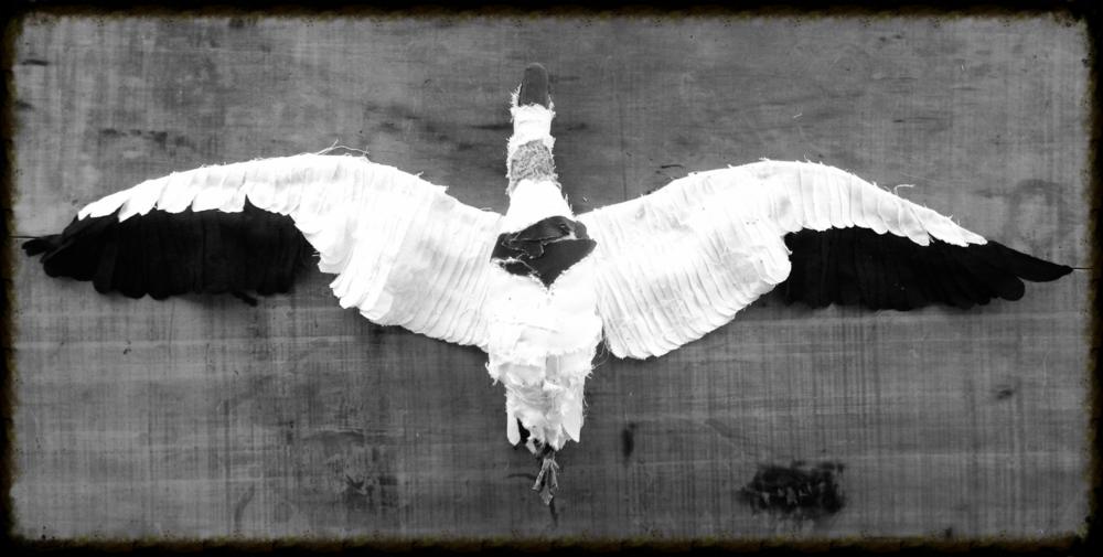Snow goose, 2014 33.6cm x 61.7cm