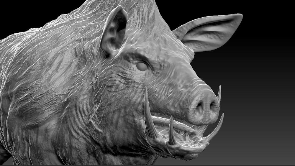 PigHead.jpg