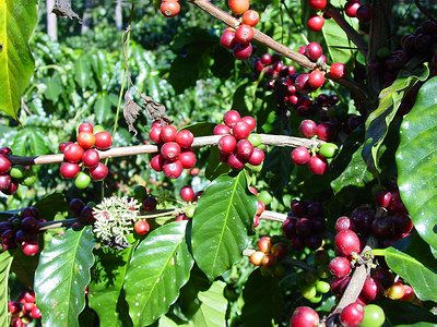 DID YOU KNOW?  Coffee is one of the most sprayed crops in the world, so choose to go organic to minimise exposure to harmful pesticides!