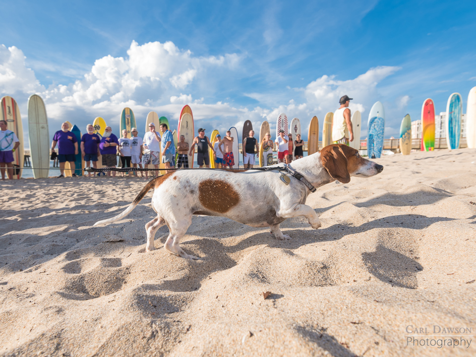 Scott Peterson's dog at his memorial service in Pompano Beach Florida.