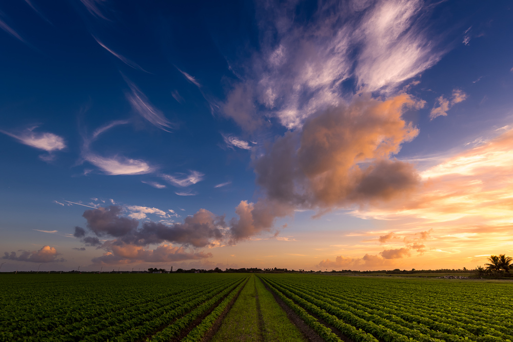 Sunset - Hialeah Farm Land