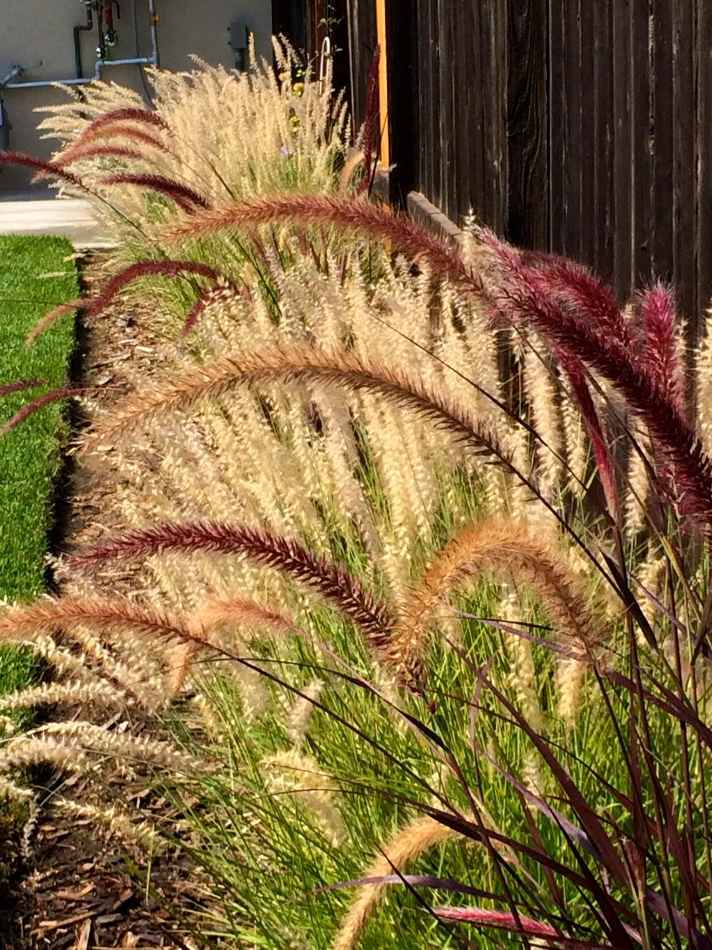 Schuyler - grasses.jpg