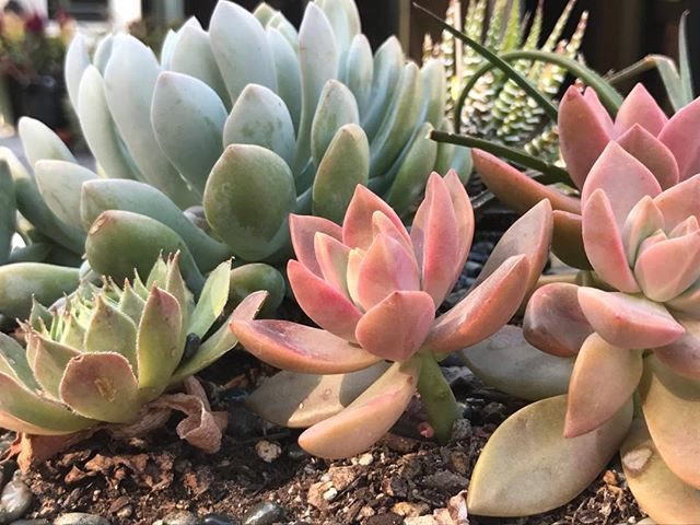 Summer succulents!  Mix different shapes and textures in a bowl-shaped planter for a fabulous outdoor table centerpiece. #succulents #summercolor